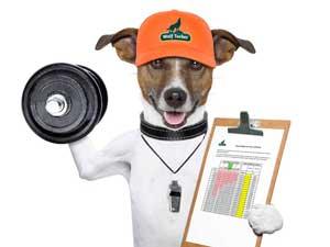 wolftucker-fitness-dog-diary.jpg